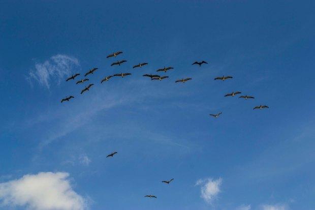 Imagen: Gaviotas volando en el cielo azul de Órganos.
